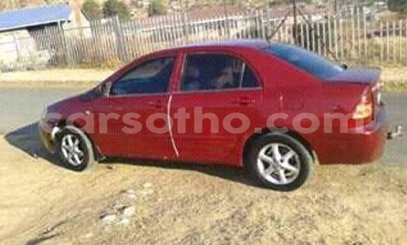 Buy Toyota Corolla Red Car in Maseru in Maseru